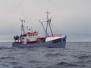 Ark´Alo Nuka - nybygning, trækutter til Grønland