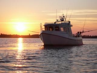 Jagt- fiskeri- og turbåd, Rødvig 800 Elizabeth, udført i glasfiber